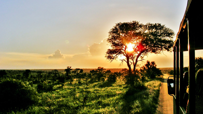 Mageløs safarioplevelse i Sydafrika