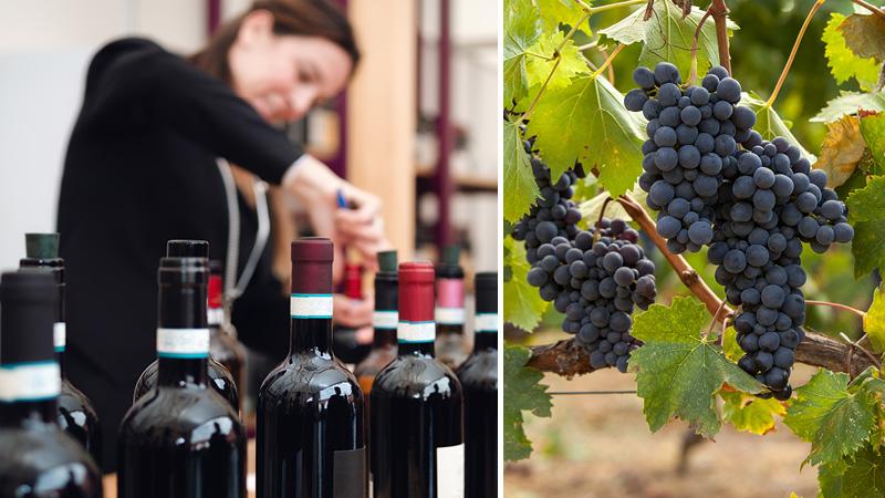 Vinsmagning på vine fra Piemonte regionen med Kulturrejser