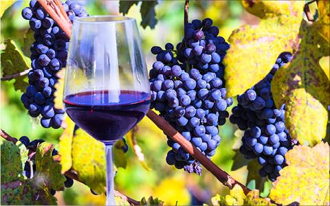Vin og gastronomi i Piemonte