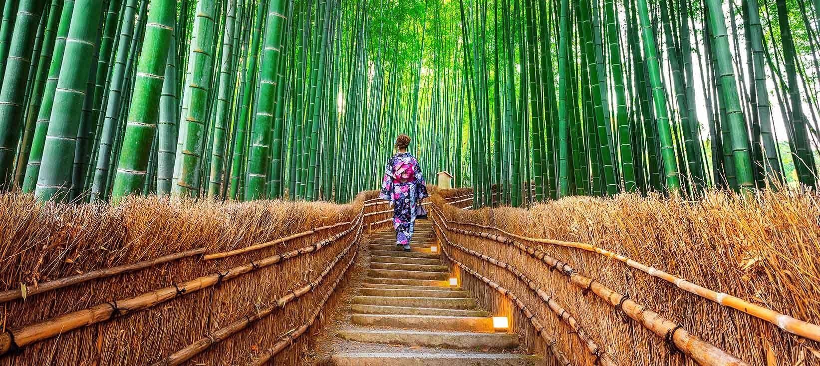 Besøg en fantastisk bambusskov nær Kyoto i Japan