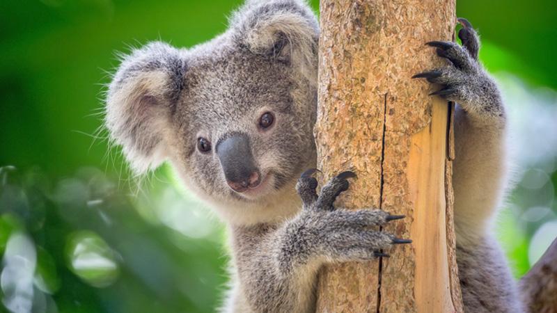 Oplev dyrelivet i Australien og New Zealand med Kulturrejser