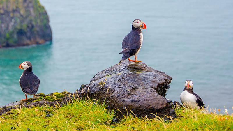 Se og oplev den fantastiske natur på Færøerne med Kulturrejser