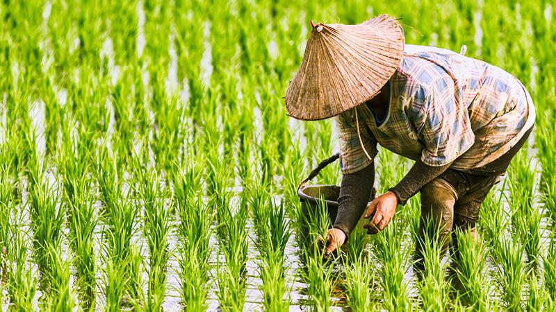 Besøg det enestående Vietnam med Kulturrejser