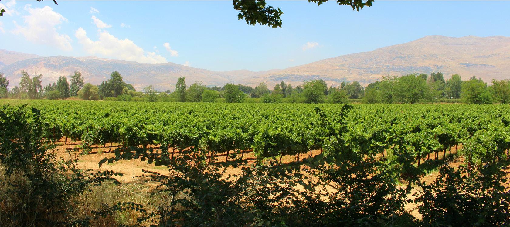 Nyd og oplev landskab i Libanon med Kulturrejser