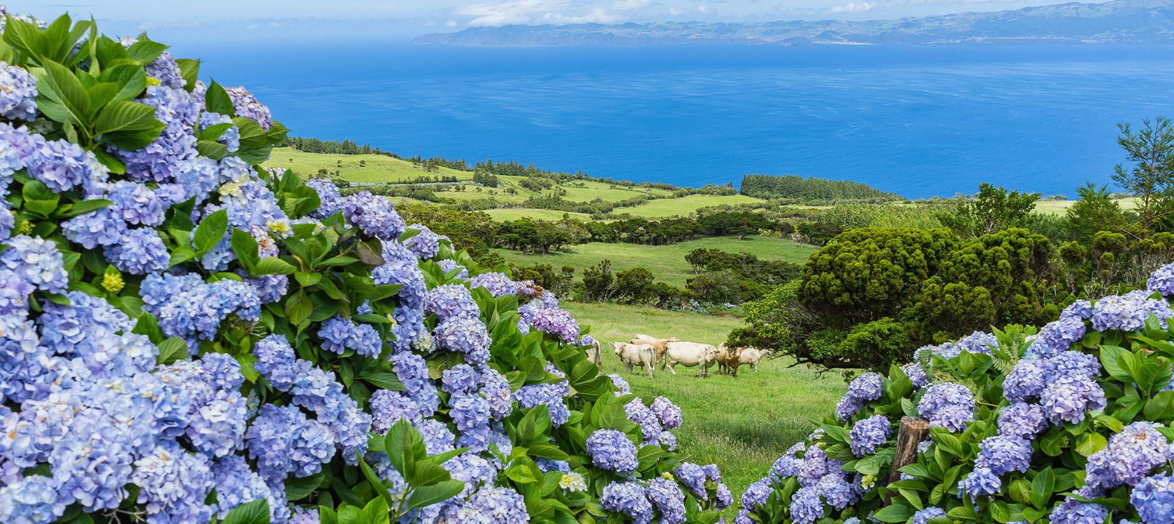 azorerne et naturligt paradis header lille