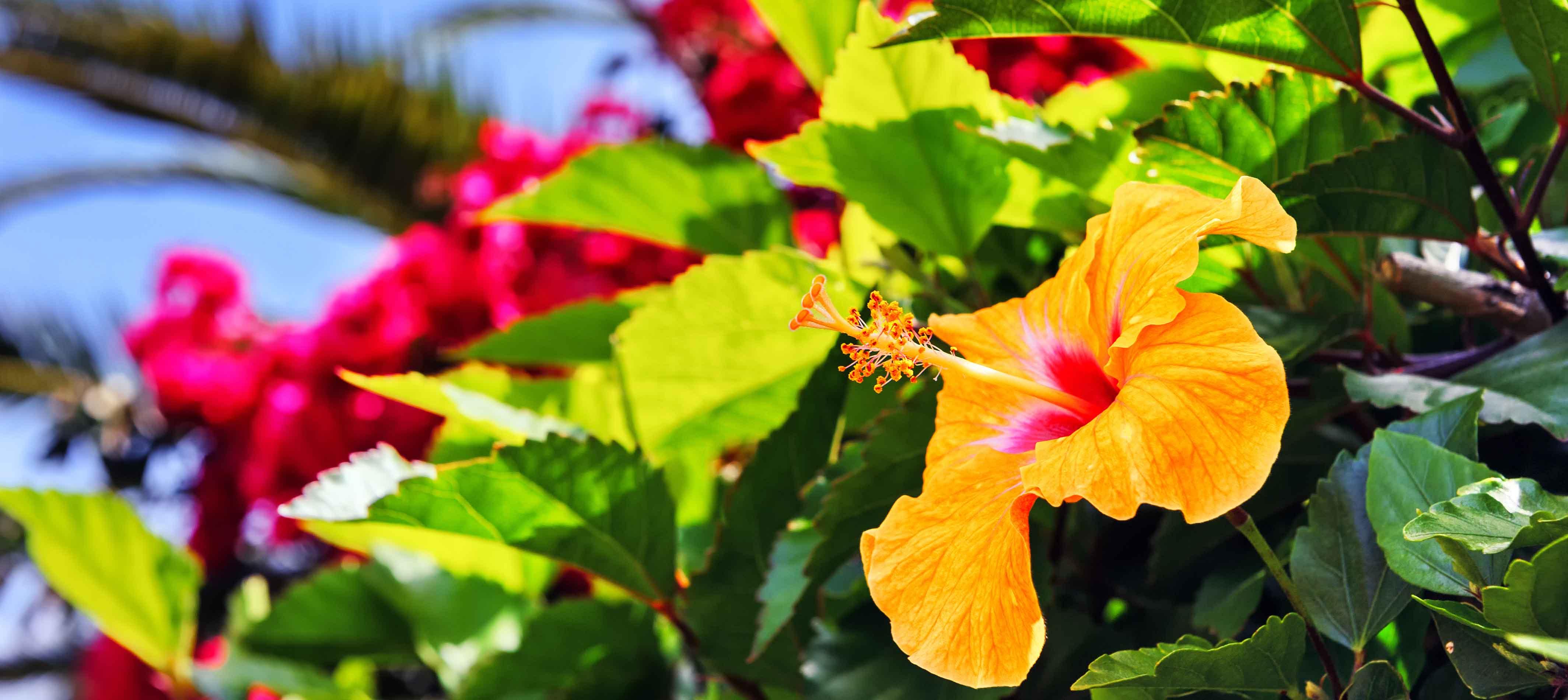 Smukke blomster på Madeira