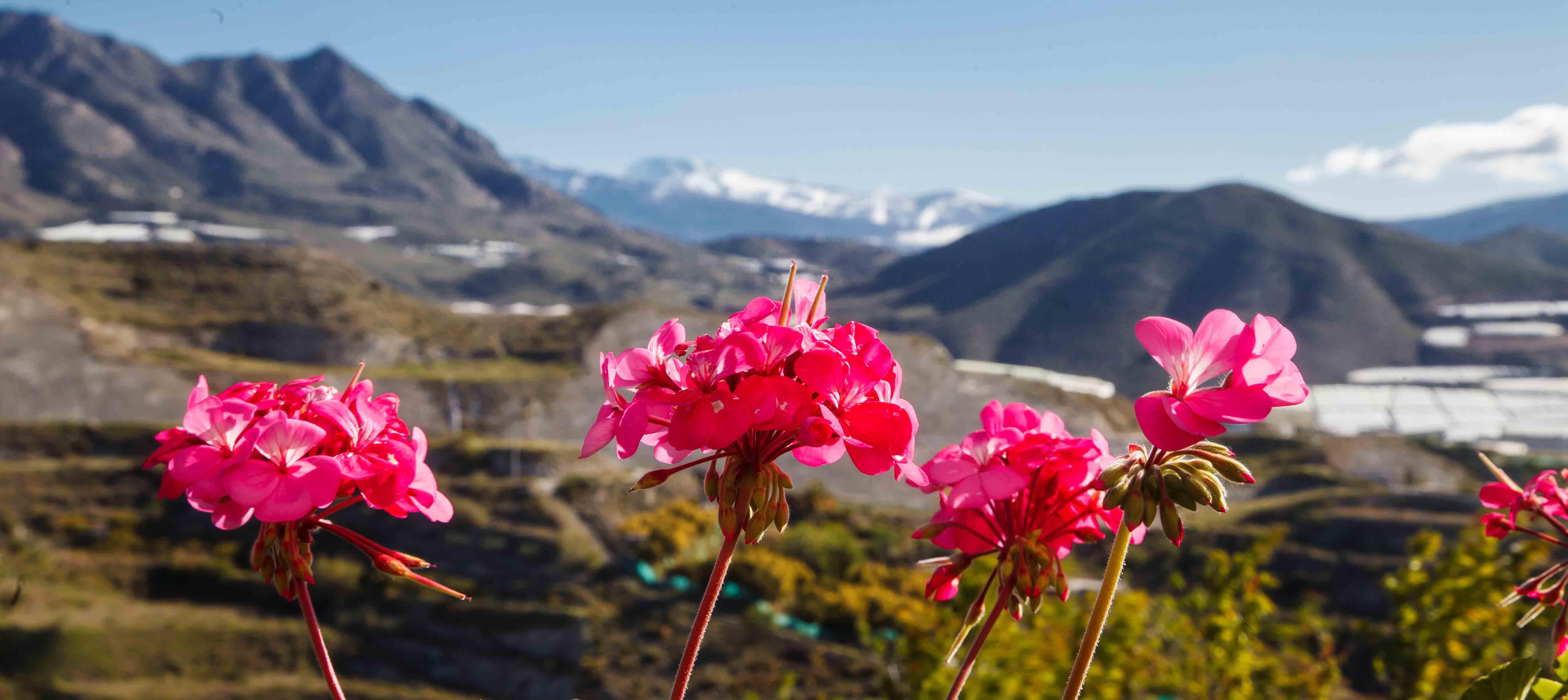 Plantev�kst i Salobrena-bjergene, Spanien