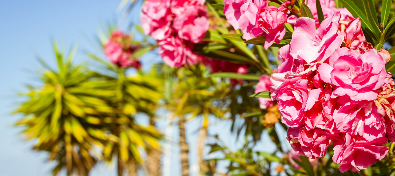 Tag med Kulturrejser og Frantz Howitz til Tenerife