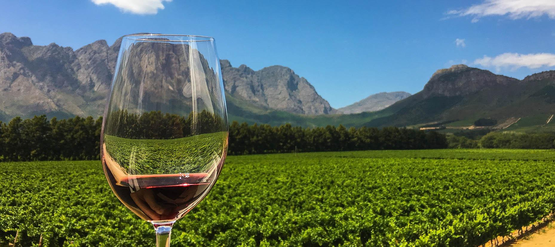 vinsmagning og vinmark i sydafrika