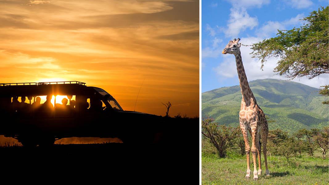 Safari i Sydafrika med Kulturrejser